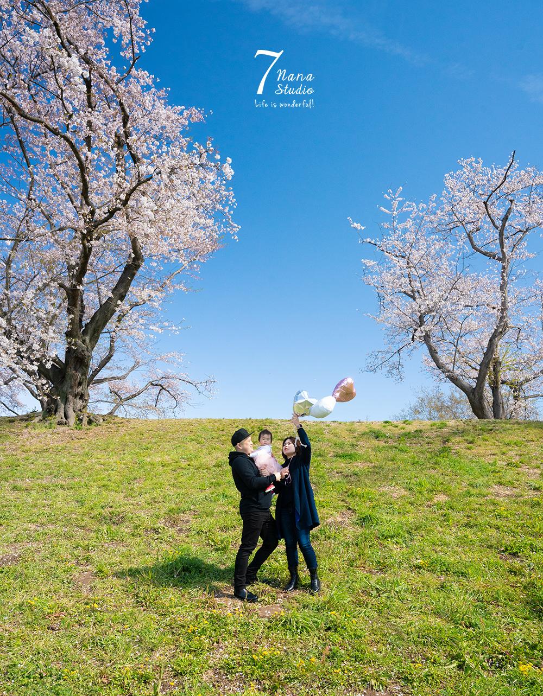 桜桜×青ロケーション 背割堤